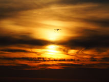 Small landing plane. Sunset scene with silhouette of a landing plane Royalty Free Stock Image