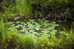Small landscaping pond Stock Photos