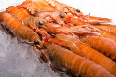 Small langoustines in ice Stock Photo
