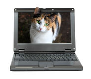 Small laptop with cat. Out of screen Royalty Free Stock Photos