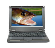 Small laptop with fishing themes. Small laptop with zander jaws -  fishing themes Stock Images
