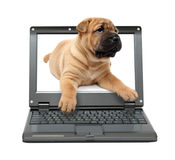 Small laptop with puppy dog Royalty Free Stock Photo