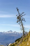 Small larch tree with view on mountains Royalty Free Stock Photos