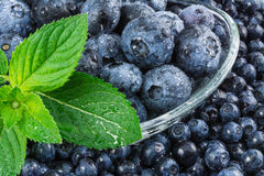 Small and big blueberries. Beautiful detail of dewy blueberries in a glass bowl with green mint leaves royalty free stock photography
