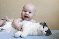 A small laughing child hugs a big fluffy cat. A small laughing child hugs a big white fluffy cat royalty free stock photo
