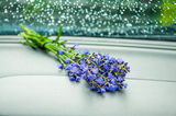 A small lavender bunch Stock Photography