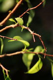 Small leaf on a branch Royalty Free Stock Photography