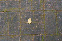 A small leaf on the brick floor and moss. A small leaf on the brick floor with moss stock images
