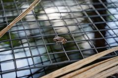 Small leaf frog on the mesh over the pool stock photography