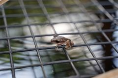 Small leaf frog on the mesh over the pool stock photos