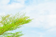 Small leaf green branch of tree tropical in nature on the sky background beautiful view with copy space add text.  Royalty Free Stock Image