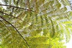 Small leaf tree Royalty Free Stock Photo
