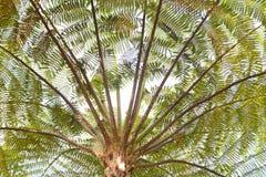 Small leaf tree Stock Photos