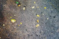 Small leaf on wet concrete floor Royalty Free Stock Photo
