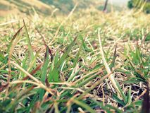 Small leafs of grass Stock Photos