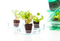 Small leafy plant. The laboratory Stock Images