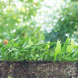 Small leather-leaf fern growing on the tree Stock Images