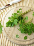 Small-leaved basil and lovage Stock Photos