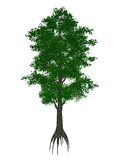 Small-leaved lime or little-leaf linden, tilia. Cordata tree isolated in white background - 3D render Royalty Free Stock Photos
