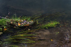 Small leaves in autumn on the water surface Royalty Free Stock Photography