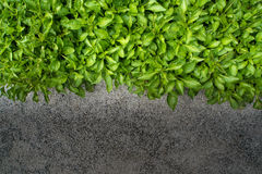 Small leaves beside the concrete floor Royalty Free Stock Photo