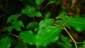 Small leaves grow on thin stalk, close-up shot. stock video footage