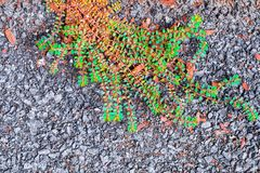 Small leaves to creative texture and pattern for design royalty free stock images