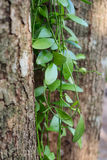 Small leaves on the tree. Decoration in the garden stock images