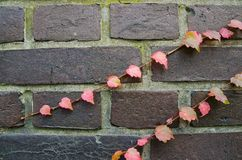 Small leaves. In the wall Royalty Free Stock Photos