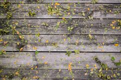 Small Leaves on Wood Deck Stock Photos