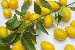 Small lemon with leaves. On white background Royalty Free Stock Photos