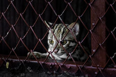 Small leopard behind the grille Stock Photography