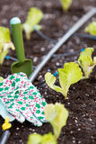 Small lettuce garden Royalty Free Stock Image