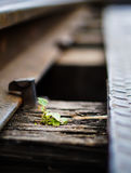 Small Life on a Railway. Soft Focus on small life growing on an old railway Royalty Free Stock Photography