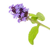 Small light lilac flowers branch Royalty Free Stock Photography