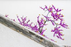 Small and light violet tree Stock Photos