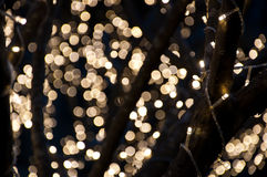 Free Small Lights On The Tree For Christmas Royalty Free Stock Images - 38641429