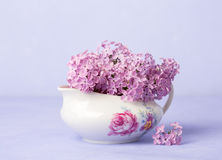 Small Lilac Bouquet on light violet background Stock Photos
