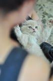 Small little cute cat Stock Photo