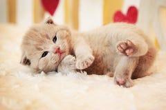 Small little cute kitten stock image