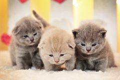 Small little cute kittens. Three small little cute kittens stock photos