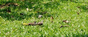 Small little doves taking a sun bath Stock Photo