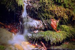 Small Little River Waterfall Streem and Mossy Stones. Macro Photography Stock Photos