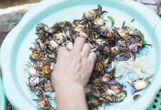 Small live crabs inside a basin at a Hanoi market. With hand touching them stock images