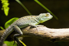 Small lizard. Small green lizard walking on a trunk Stock Photography