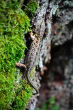 Small lizard crawling on a tree trunk Stock Image