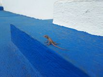 Small lizzard on the floor stock photography