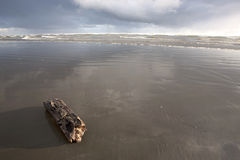 Small log by Pacific Ocean. A small driftwood log lays in the wet sand at Pacific Beach in Washington Royalty Free Stock Photos