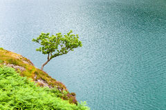 Small lonely tree on rock over lake water surface. Small lonely tree on rock over water surface of lake Llyn Peris, Wales, Great Britain. Minimalistic nature stock photo
