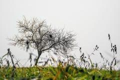 Small lonley tree Royalty Free Stock Photos